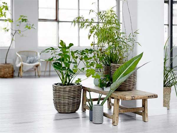 ideas para decorar tu hogar con plantas garden