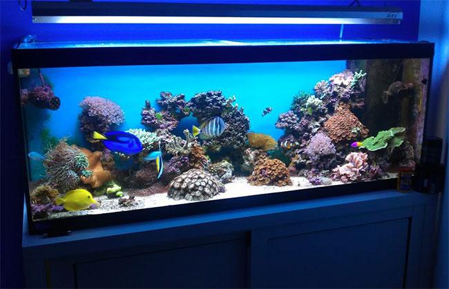 Cuidados b sicos de peces de acuario parte 1 peces de for Cuidados acuario agua fria