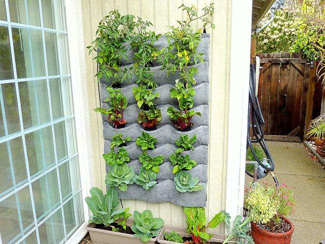 Caracter sticas y beneficios de los jardines verticales for Beneficios de los jardines verticales