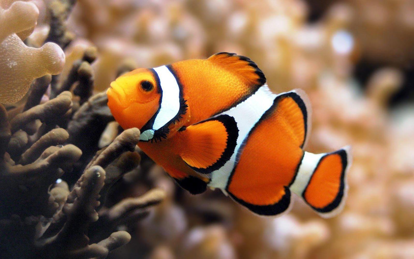 Cuidados b sicos de peces de acuario parte 1 peces de for Cuidado de peces
